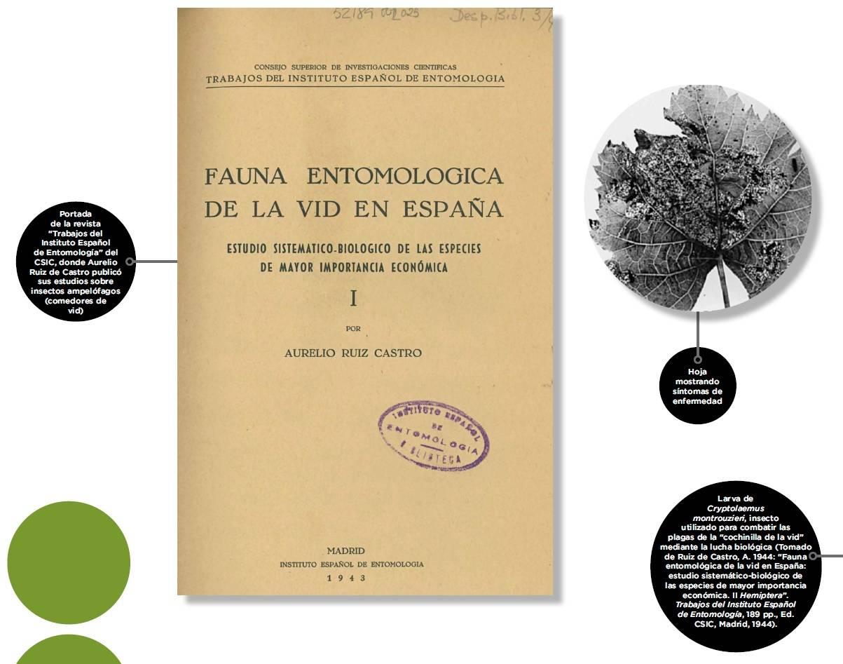 El estudio de las plagas y enfermedades en la Vid. - Noticias de ...