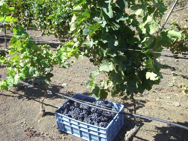 Iniciación a la cata de vinos de Palma de Gran Canaria