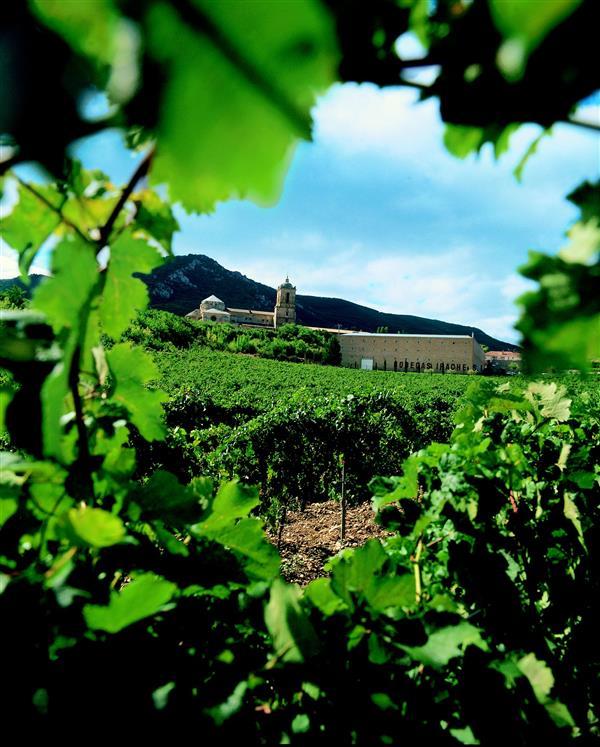 Visita al Museo del Vino, bodega nueva, cata y aperitivo