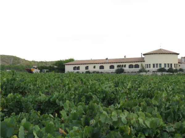 Cata de vino Mainetes