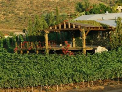 Degustación en terraza: tres vinos
