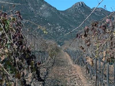 En Armonía con los vinos de Emevé