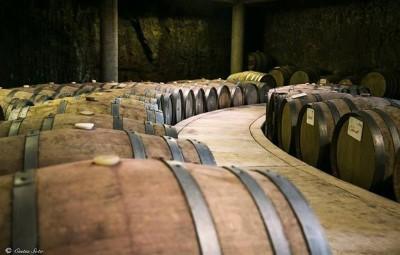 Cata de vino de Barricas en Bodegas Alximia