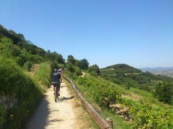 Rutas en bicicleta y catas de vinos