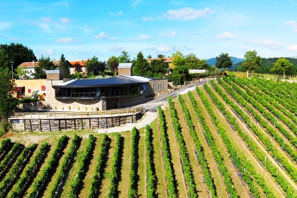 Visita y cata de vinos en Bodega Berroja