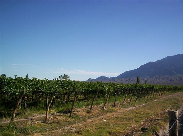 ¿Conoces las zonas vitivinícolas de Argentina y sus variedades cultivadas?