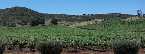 ¿Conoces las zonas vitivinícolas más importantes en México?