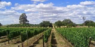 El crecimiento de la producción de vinos en la región más austral del planeta.