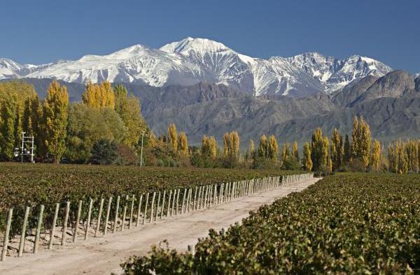 Dos maneras de vivir el Enoturismo en Mendoza.