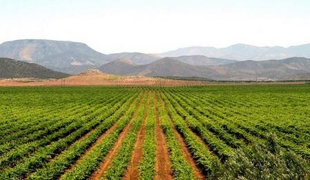 Vinos del Mundo: Las regiones vitivinícolas de México