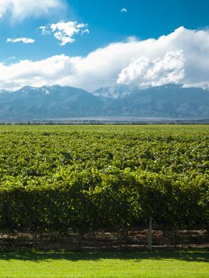 ¿Sabes cuales son las regiones de cultivo del Malbec en Argentina?