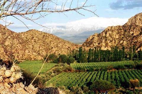 Ruta del vino por La Rioja Argentina.