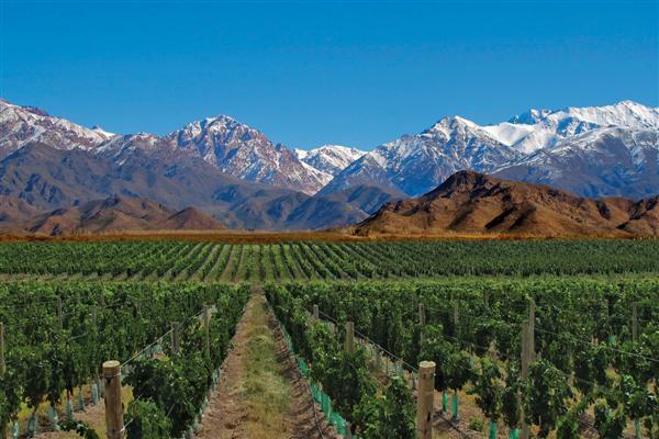 Mendoza, el gran paisaje vitivinícola de Argentina.
