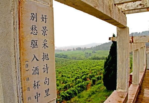¿Se produce buen vino en China?