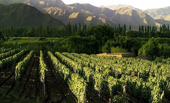 El Vino en Argentina: producción, tipos de uva, y clasificación.