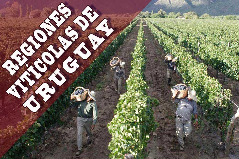 ¿Cuales son las zonas vitícolas de Uruguay?