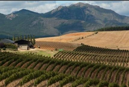 La Ruta del vino por Río negro en Argentina, el vino más austral.
