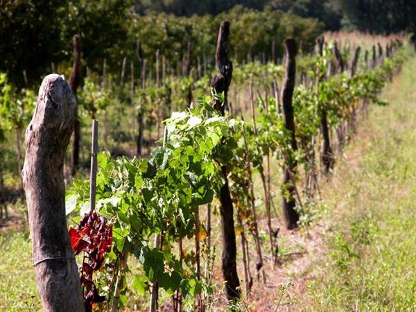 La viticultura Argentina, adaptación y diversidad