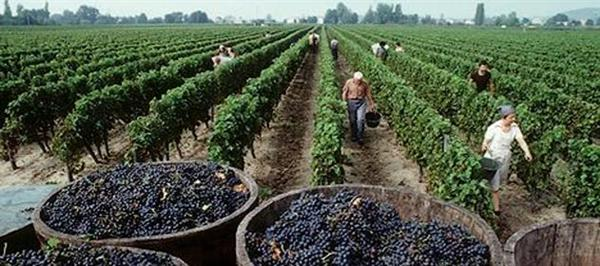 El clima, factor clave para la vitivinicultura argentina.