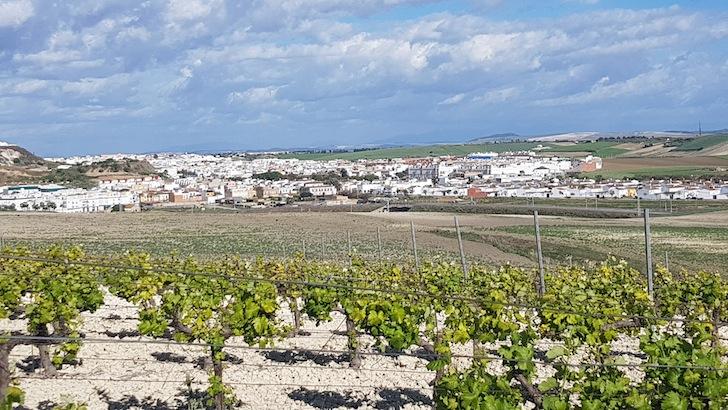 Sevilla y el Bajo Guadalquivir