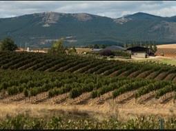 Bodegas australes. La región vitivinícola de Rio Negro.
