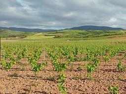 Castilla la Mancha invita al sector vitivinícola a de Albacete a unirse.