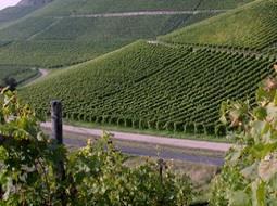 Conoce los vinos del mundo: el  vino Spätburgunder.