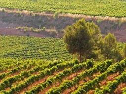 ¿Conoces el sistema de Protección de origen y calidad de los vinos?