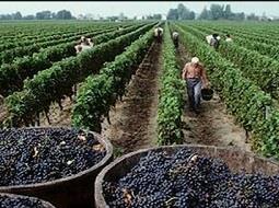 El despegue del vino argentino tras la crisis.