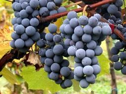 El sector de la Calidad Diferenciada Agroalimentaria registra un crecimiento en los vinos.