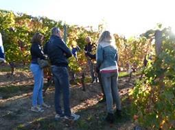 El vino de Ribera Sacra busca conquistar Holanda.