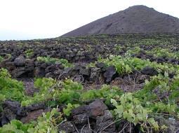 El vino especial que la Isla de Palma produce