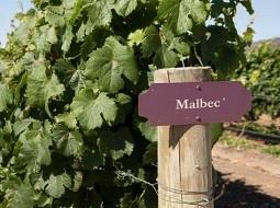 El vino Malbec argentino conquista a los Masters of Wine.