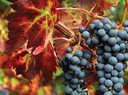 En 2017 los vinos argentinos destacarán como nunca las cualidades de su terroir
