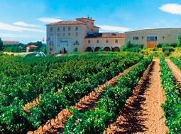 Gastronomía y vino en Castilla León. El paraíso del enoturismo.