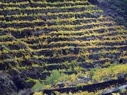¿Has probado los vinos de Tea de la Palma?.