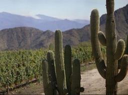 Joyas vitivinícolas: Valles Calchaquíes.