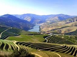 La Asociación de Municipios Portugueses del Vino potenciará la difusión de la cultura vitivinícola.