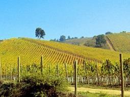 La producción mundial de vino en 2017, estimada en 246,7 Mill. hL.