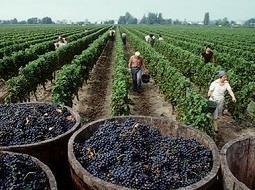 La viticultura de Chile. De la colonia española a la revolución tecnológica.
