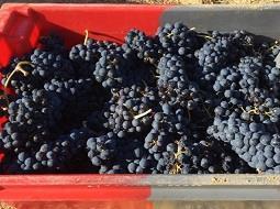 Las ventas de los vinos de la D.O. Toro crecen el 12% hasta octubre
