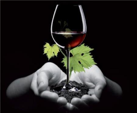 Los consumidores están dispuestos a pagar más por un vino ecológico.
