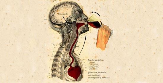Los efectos del Vino sobre la salud.