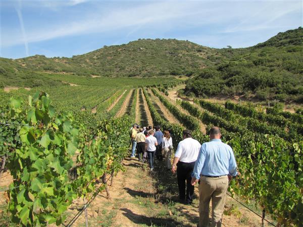 Los retos del turismo del vino se abordarán en el congreso internacional de Aenotur, 17-19 de septiembre en Uruguay