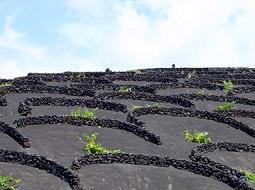 Los vinos de malvasía de Lanzarote destacan en la Guía Peñín 2018.
