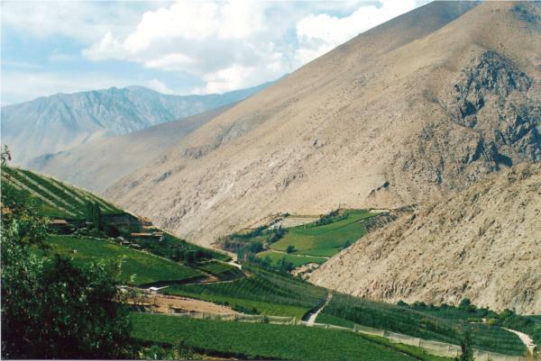 ¿Por qué el clima Chileno es ideal para la viticultura?.