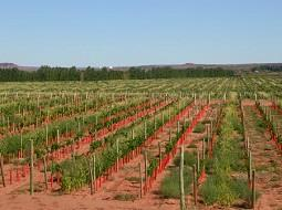Primera exposición de vinos de la Patagonia en Buenos Aires.