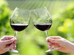 ¿Qué efectos beneficiosos tienen para el organismo los pofifenoles del vino?