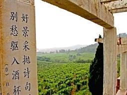 ¿Sabes que China produce vino desde hace 4.000 años?.