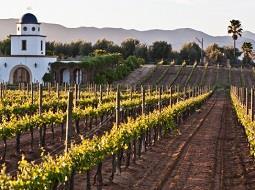 ¿Sabrías identificar regiones vitivinícolas en México?.